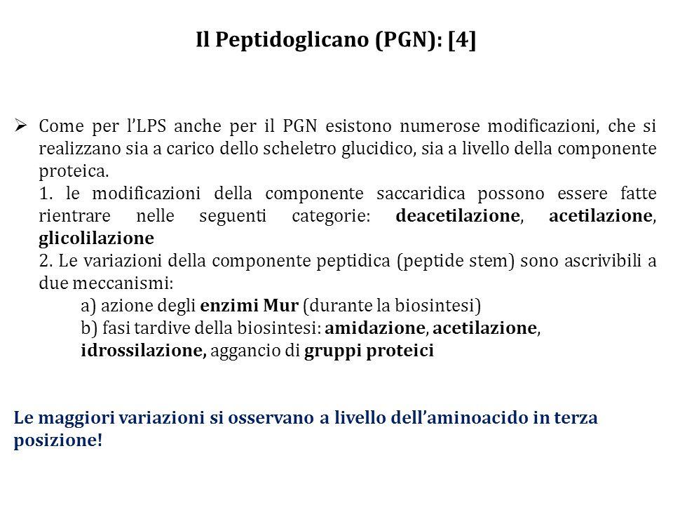 Il Peptidoglicano (PGN): [4]